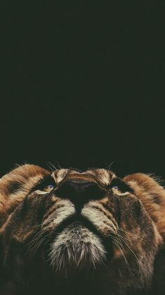 The animal kingdom is filled with almost an infinite variety of creatures. Scientists discover new species and subspecies every year. Tier Wallpaper, Black Phone Wallpaper, Animal Wallpaper, Bridge Wallpaper, Animals And Pets, Baby Animals, Cute Animals, Wild Animals, Beautiful Creatures