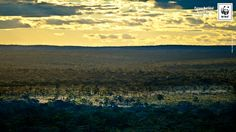 Parque Nacional Grande Sertão Veredas (MG/BA)