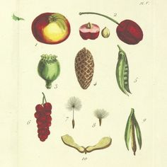 15 Fancy and Funny Food Illustrations From the British Library | FWx