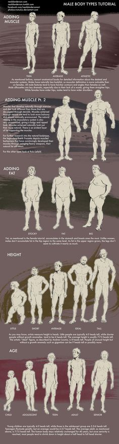 Male Body Types Drawing Tutorial by Phobos Romulus @ deviantART — Anatomy studies for artsists Doodle Drawing, Anatomy Drawing, Painting & Drawing, Human Anatomy, Anatomy Male, Anatomy Reference, Drawing Reference, Color Draw, Illustrator