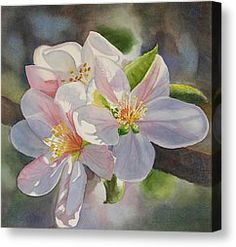 Apple Blossom In Sunlight Painting by Sharon Freeman - Apple Blossom In Sunlight Fine Art Prints and Posters for Sale