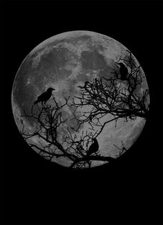 Black Tote Bag - Moon and Ravens - Cotton Canvas Tote Bag Night Sky Wallpaper, Dark Wallpaper, Black And White Photo Wall, Black And White Photography, Black Aesthetic Wallpaper, Aesthetic Wallpapers, Landscape Tattoo, Gothic Aesthetic, Moon Pictures