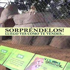 Perro zoológico, #marketing #seo #visionoriginal