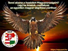 Magyar vagy? Tenni akarsz a hazádért Magyarországért? Lépj be közénk, csatlakozz az egyetlen magyar alapítású párthoz! Owl, Bird, Animals, Animales, Animaux, Owls, Birds, Animal, Animais