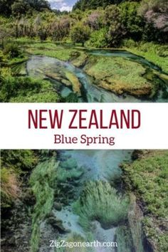 Putaruru Blue Spring in New Zealand -- #newzealand | New Zealand Travel Guide | Things to do in New Zealand Island | New Zealand photography | New Zealand Road Trip | New Zealand scenery | New Zealand travel tips | New Zealand itinerary | #Travel | Travel Inspiration | Scenery & Wanderlust | Best Travel destinations