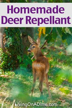 1000 ideas about deer repellant on pinterest deer - How to keep deer out of garden home remedies ...