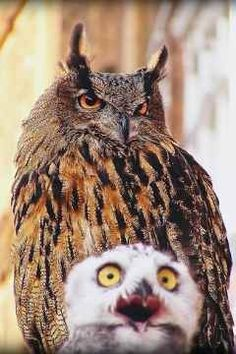 Owl photo bomb FOR THE WIN!