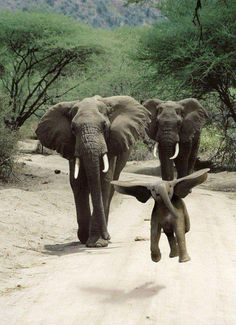 "happy baby elephant ~ Adorable! ""Were on a walk, were on a walk, Im so excited!!!"""