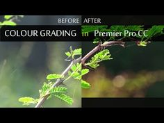 (8) Cinematic Look Colour Grading In Premier Pro CC - YouTube