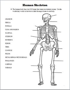FREE Download Muscular System Worksheet, Human Body