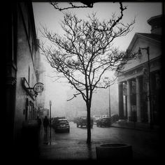 Compared to me, a tree is immortal (Sylvia Plath)