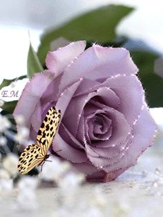 Animation Butterfly sits beside a rose, SIFCO butterfly sits beside a rose Butterfly Flowers, Beautiful Butterflies, Beautiful Roses, My Flower, Flower Art, Flower Power, Rose Flower Wallpaper, Flowery Wallpaper, Lavender Roses