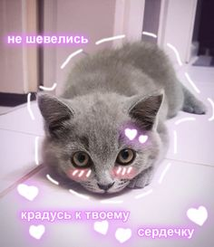 Cat Mem, Sweet Memes, Cute Love Memes, Cute Texts, Sad Day, My Mood, Love Pictures, Kittens, Cute Animals