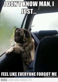 Introspecitve Pug is sad
