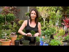 Planting and Pruning Herbs from Tara Heibel at Sprout Home