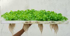 Hydroponic gardening 463800461628739816 - The Alternative Daily Hydroponics System, Hydroponic Gardening, Gardening Tips, Vegetable Gardening, Backyard Coop, Chickens Backyard, Edible Plants, Edible Garden, Grow Your Own Food