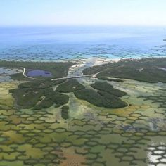 Integrating architecture and ecology, this proposal for a modular natural dam design could help defend coastal communities from climate change-induced natural disasters. Landscape And Urbanism, Landscape Design, Urban Landscape, Mangrove Forest, Agricultural Land, Sea Level Rise, Parking Design, Land Art, Climate Change