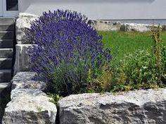 produkt ziergras-kollektion, 6 pflanzen 3 pflanzen rotes, Garten ideen