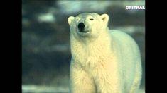 Ταξίδι στους Πάγους 1 τα Ζώα των Πάγων