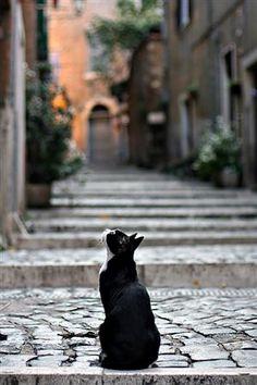 "Photo ""Waiting food"" by Antonio Torkio :)"