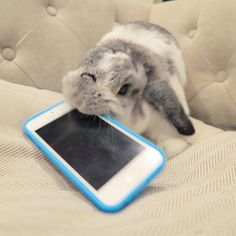 Mmm My Favourite Flavour... Mummy's Iphone! #NaughtyBunny
