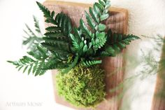 Leather Leaf Fern and Moss Rustic Wood Flat Wall by ArtisanMoss