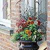 FALL planting in container ideas. This one purple fountain grass, coleus, zinnia, annual black eyed susan, superbells