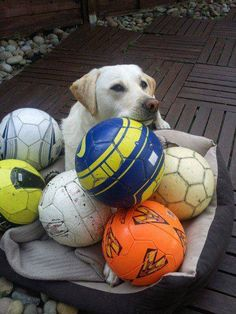 these r all mine what r u going 2 play with ? have fun my sweet t www.capemaydogs.com