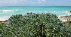 Tropical plants in Cayo Santa Maria. Cayosantamariacuba.net
