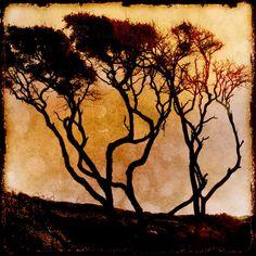 Tree Photography - Home Decor - Nature - Warm - Wall Art - Decorating via Etsy