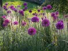 Image result for herbaceous perennial