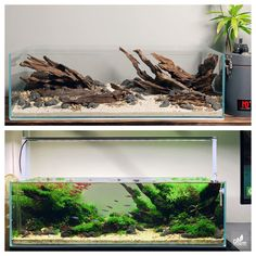 Nature Aquarium, Planted Aquarium, Aquarium Fish, Betta Tank, Fish Tank, Aquarium Design, Tanked Aquariums, Aquascaping, Terrarium