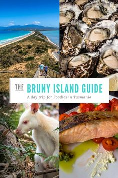 The perfect Bruny Island day trip for foodies Tasmania Road Trip, Tasmania Travel, Western Australia, Australia Travel, Queensland Australia, Bruny Island, New Zealand Travel, Travel Destinations, New Zealand