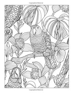 Wild At Heart Adult Coloring Book Stress Relieving Designs Artists