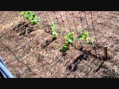 ▶ Vertical Gardening Using Grow Arches - YouTube