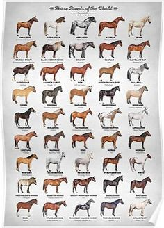 Why do you think is it essential to consider the proper suggestions in acquiring the equestrian boots to be utilized with or without any horseback riding competitors? Equestrian Outfits, Equestrian Style, Cute Horses, Beautiful Horses, Horse Anatomy, Horse Facts, Horse Posters, Types Of Horses, All About Horses