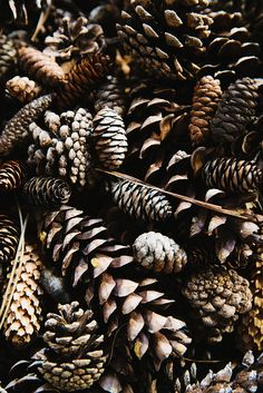 Pines cones. Beautifully styled photo by Nicole Franzen. Great textile look.