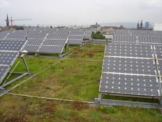 PV panels are more efficient when installed on a green roof because of the cooling effect of vegetation. The shade cast by the panels also created micro climates on the green roof which allows different species to thrive and increases bio diversity.