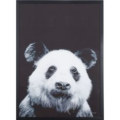 Panda Photographic Print Wall Art 73x53cm