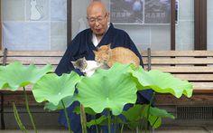 一匹の野良猫をきっかけに「猫寺」になったお寺!その日常に心が温まる – grape [グレープ] – 心に響く動画メディア