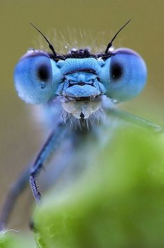 Pretty unique looking Dragonfly Images, Dragonfly Art, Nature Animals, Animals And Pets, Cute Animals, Dragonfly Illustration, Cool Bugs, Beautiful Bugs, Insect Art