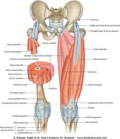 Common Peroneal Nerve   Pinterest   Nerve anatomy, Chronic pain and Crps
