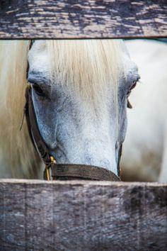 Equine Poetry: Photo