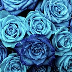 Blue Roses Art Print by Aloke Design - X-Small Flower Backgrounds, Wallpaper Backgrounds, Iphone Wallpaper, Blue Roses Wallpaper, Flower Wallpaper, Red Plants, Everything Is Blue, Blue Wallpapers, Rose Art
