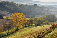 Landscape (photo credit to Pasquale Martino)