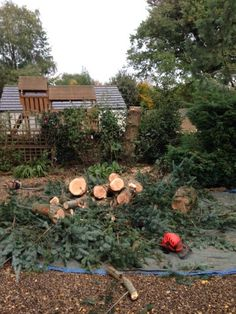 Pine tree Felled and dismantled.