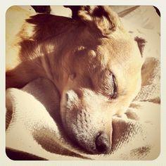 puppy love and sunshine