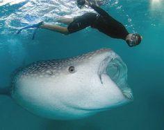 Maldives Sea life