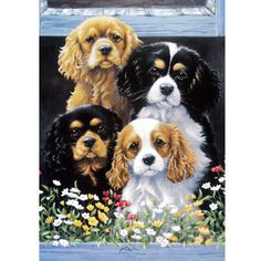 Dogs - The Window Box (Cavalier King Charles) - 6 pack