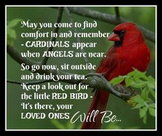 Image result for cardinals appear when angels are near poem